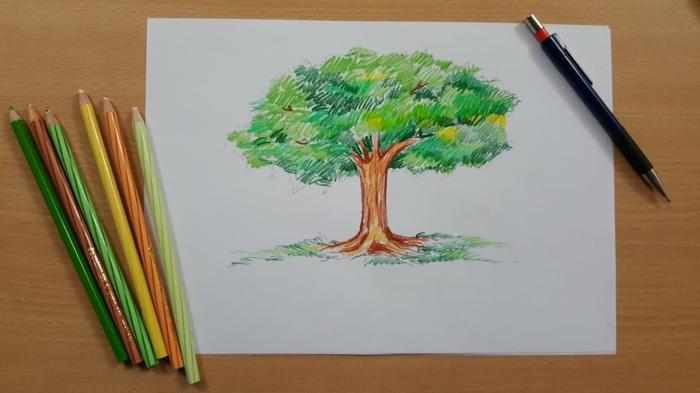 Dessin d arbre en hiver dessin branche arbre dessins d arbres coloré