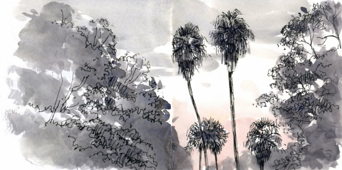 Comment dessiner un arbre facilemen dessiner des arbres