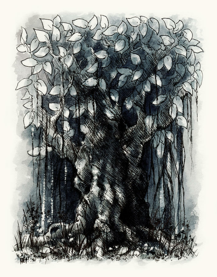 Dessin d arbre dessin au crayon noir arbre dessin beau