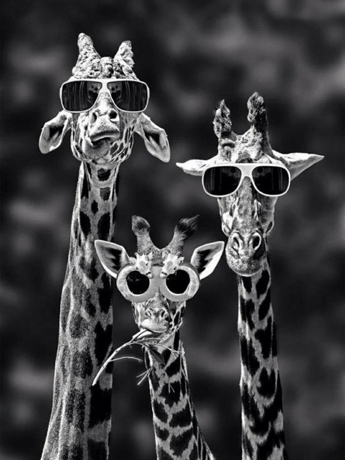 fond d'écran portable, dessin amusant avec famille de girafes qui portent lunettes de soleil foncées