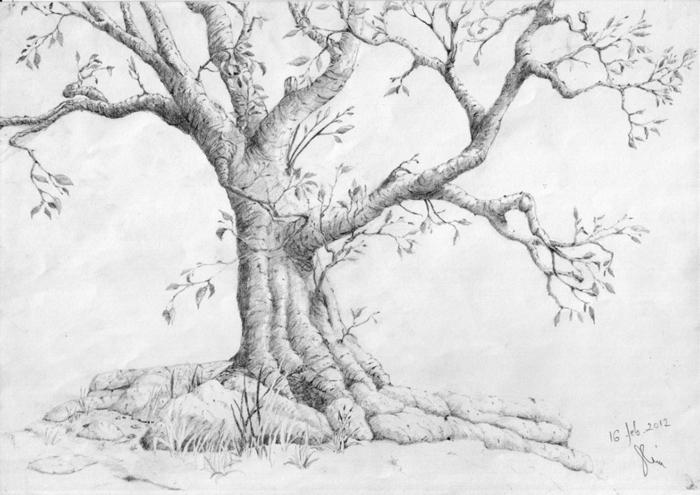 Arbre dessins dessin d arbre mort dessin arbre nu dessin simple