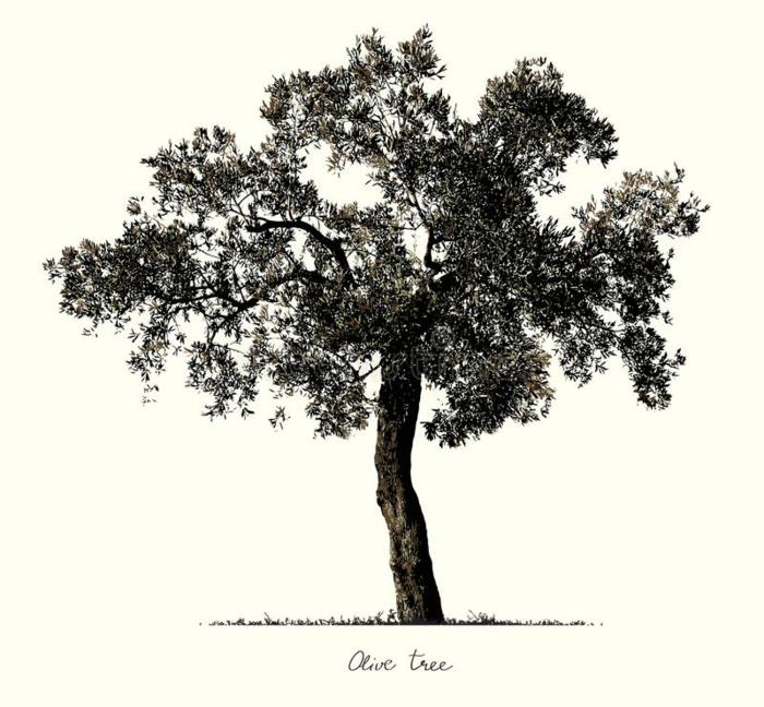 Beau arbre facile a dessiner dessin un arbre dessiner arbre