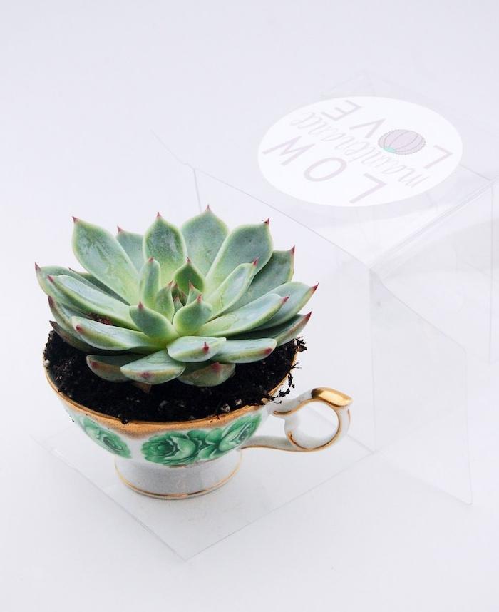cadeau de noel a fabriquer un succulent dans une tasse à thé simple, idée originale de cadeau pour un passionné du jardinage