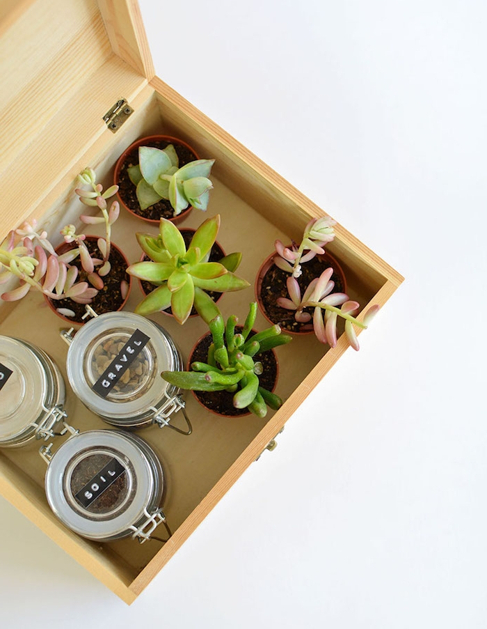 kit jaridnage avec des succulents et terreau dans une boîte en bois, cadeau anniversaire homme femme passionné du jardinage
