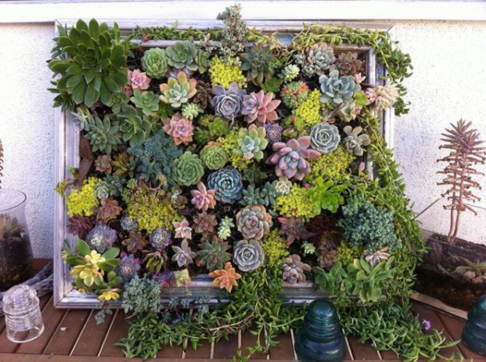 mur végétal intérieur, cactus et succulents plantés dans un cadre en bois