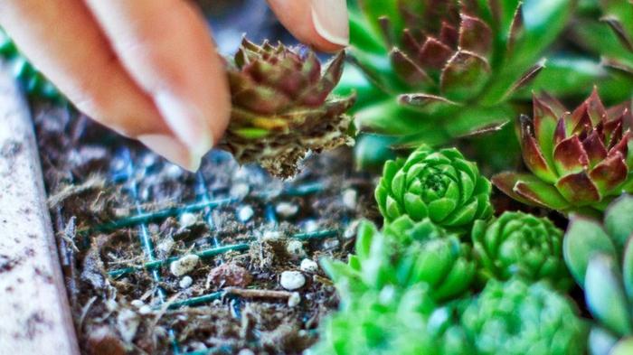 déco murale écologique, succulents piqués dans un jardin miniature d'intérieur