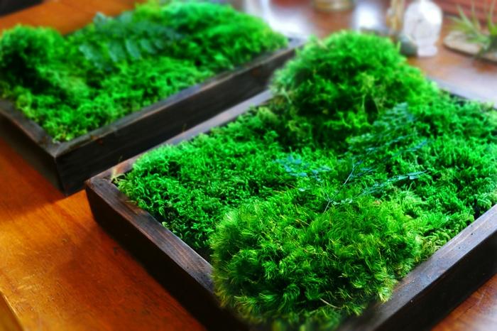 création de mur végétal intérieur, cadre en bois, mousse verte plantée dans des cadres