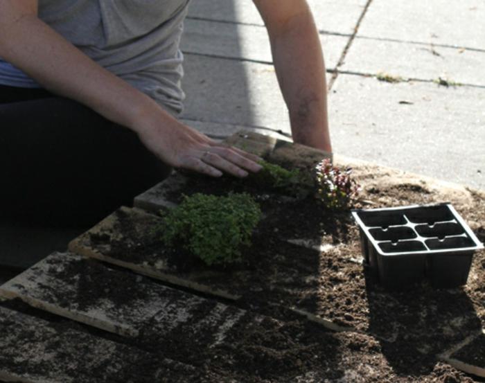 décoration avec matériaux recyclés, mur de plante à cultiver chez soi ou à l'extérieur