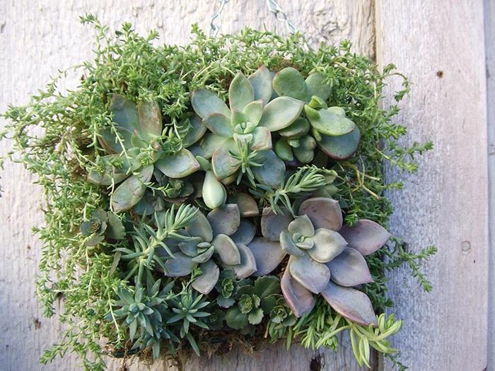 carré végétal suspendu au mur, plantes décoratives vertes, composition végétale