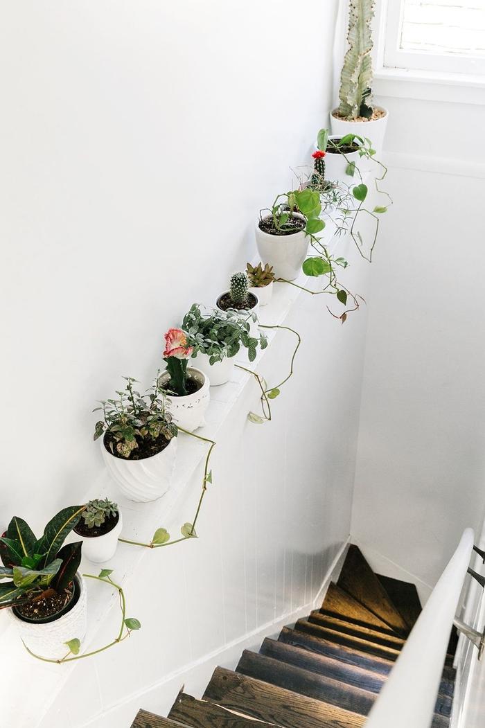 deco montee escalier avec des plantes vertes disposées tout au long du mur qui se fondent dans l'ambiance épurée