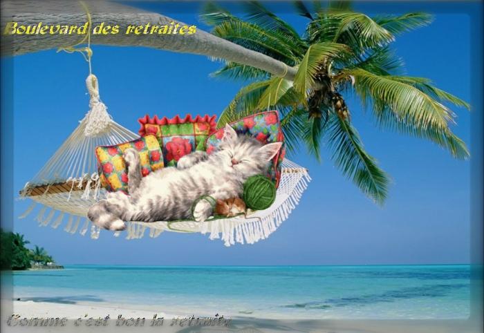 départ à la retraite, carte de retraite, invitation, Boulevard des retraités, un chaton blanc qui se tape du bon temps sur la plage d'une île