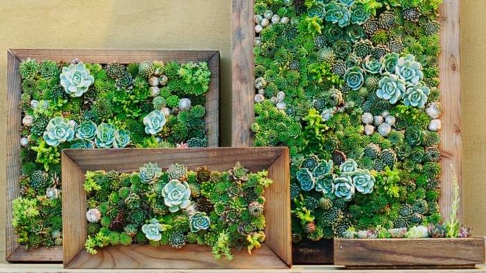 plantes cultivées dans des encadrements de peintures, quelles plantes cultiver verticalement
