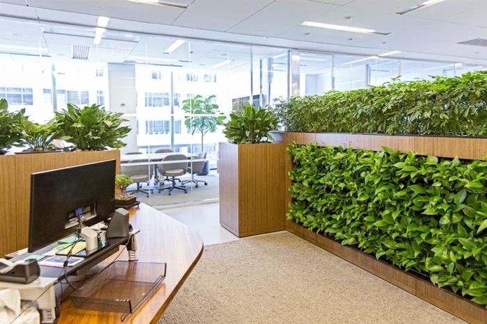 panneau végétal dans l'office, décoration vivante et verte, grand office lumineux