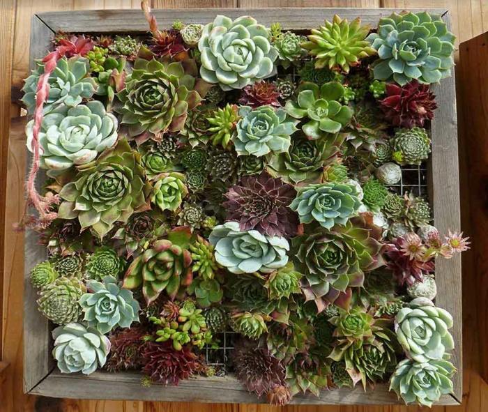 cadre végétal avec succulents plantés, comment ajouter des touches nature à l'espace