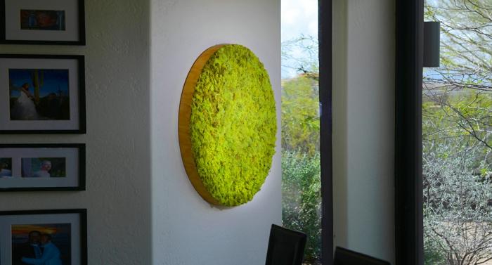 petit jardin en forme ronde, mousse plantée dans un cadre rond, photographies encadrées