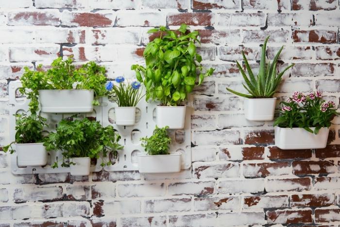 mur en briques peint blanc avec des pots suspendus, plantes vertes plantées