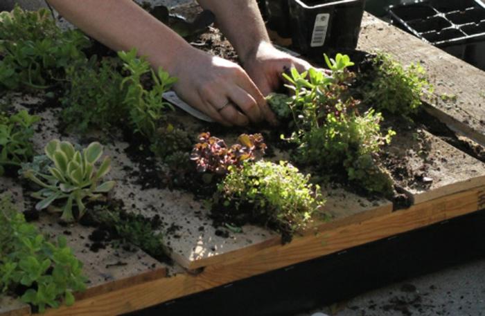 mur de plante écologique céée avec palette, jardin miniature à cultiver chez soi