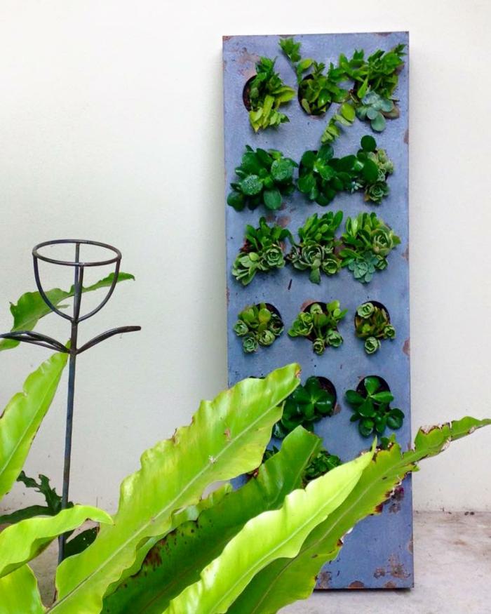 comment faire un mur végétal, un cadre bleu, une belle plante verte et mur blanc