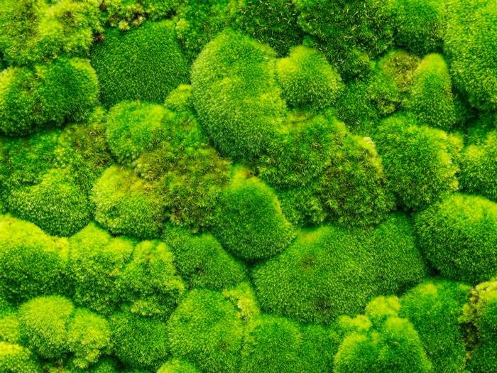 tapis mural vivant, mur vegetal intérieur avec mousse verte, décoration vivante