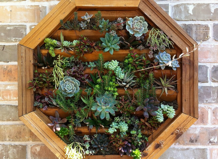 jardinière verticale, mur vegetal avec succulents, accrocher un cadre en bois avec succulents