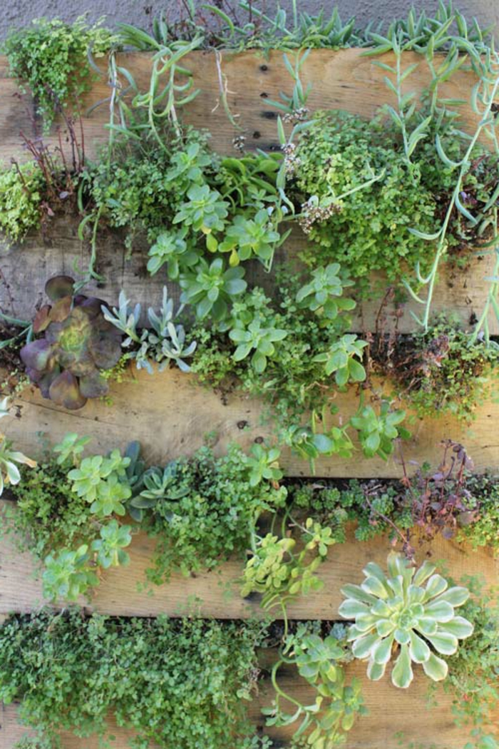 1001 id es d co originales pour un mur v g tal int rieur for Construire un mur vegetal avec une palette