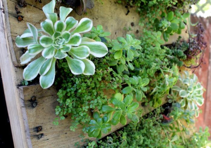 jardin intérieur original, succulents plantés dans une palette en bois, idées déco verte