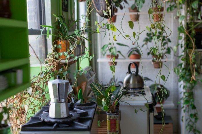 cuisine style rustique, étagère avec pots de fleurs, mur végétalisé design traditionnel