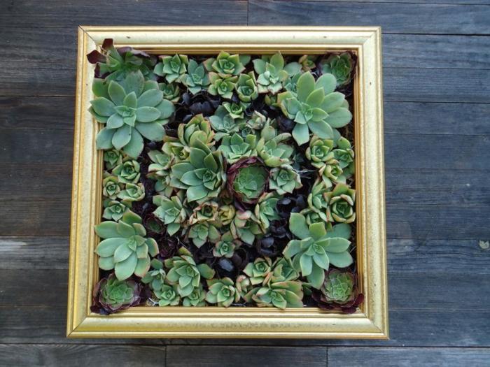 cadre de peinture utilisé pour créer un mur vegetale, succulents plantés