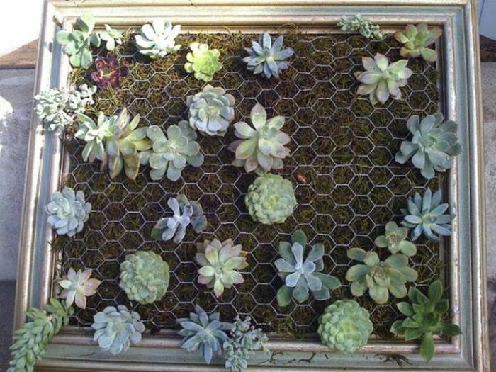 jolie déco avec des succulents fabriquée à partir d'un encadrement de peinture