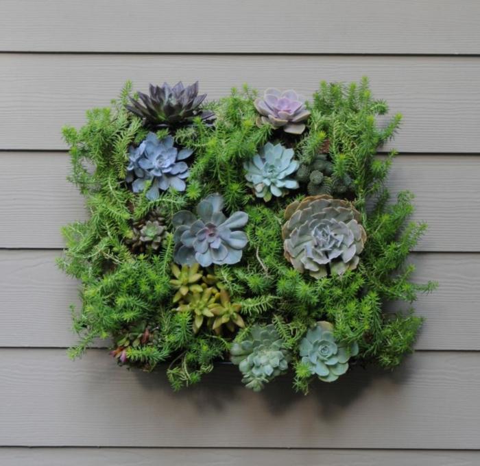 petit jardin décoratif suspendu au mur, succulents de différentes espèces