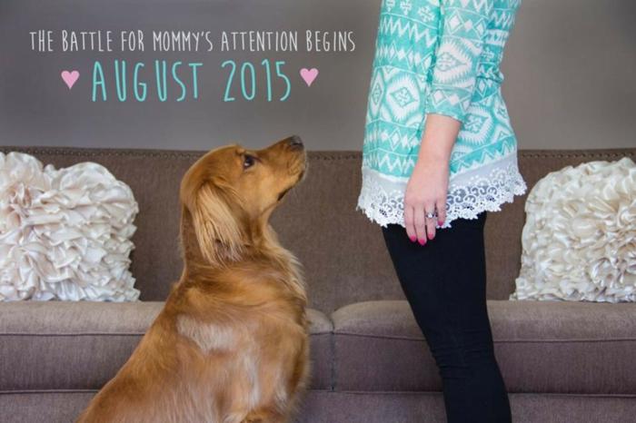 comment faire une annonce grossesse originale, photo du chien et de la future maman