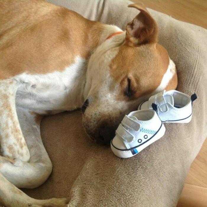 chien qui dort avec deux petits souliers près de sa tête, annoncer la nouvelle de manière créative, annoncer sa grossesse