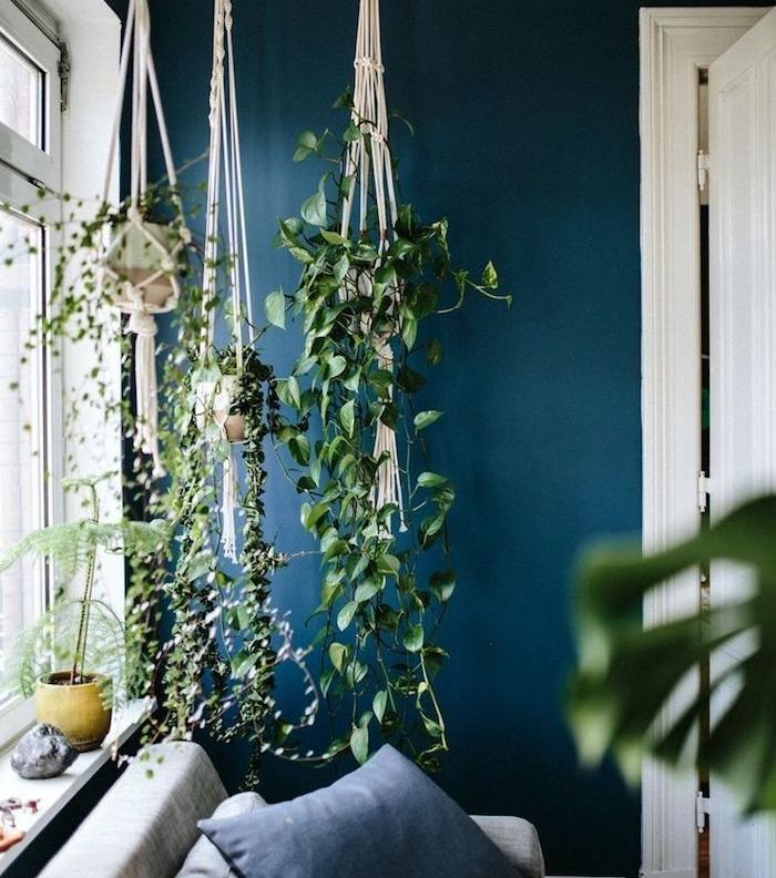 modele de canapé gris avec coussin bleu, plantes dans des pots supendus macramé, mur couleur bleu paon