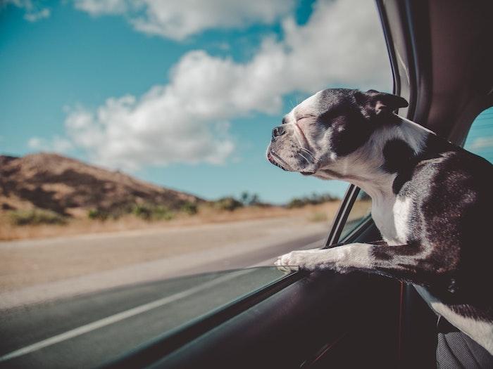 Amusant fond d écran animaux drole fond d écran trop drole chien voiture hd amusante photo