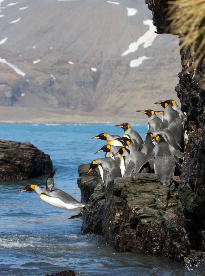 fond d écran jolie photo de groupe de pingouins qui sautent dans l'eau, paysage de nature avec rochers et eau