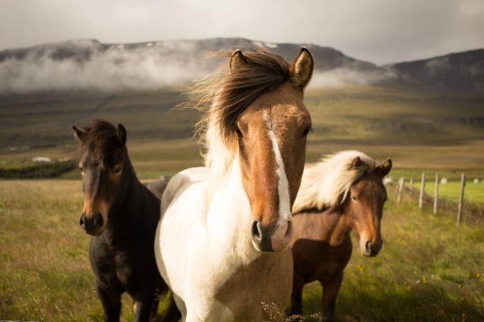 cheval pour fond d écran gratuit pour ordinateur, photo de champs et collines verts avec chevaux blanc noir et marron