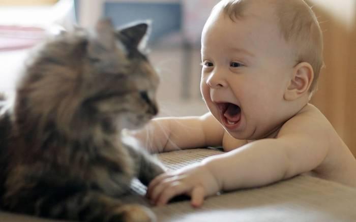 Photo fond d écran drole fond d écran cool fond d écran supreme bébé et chaton