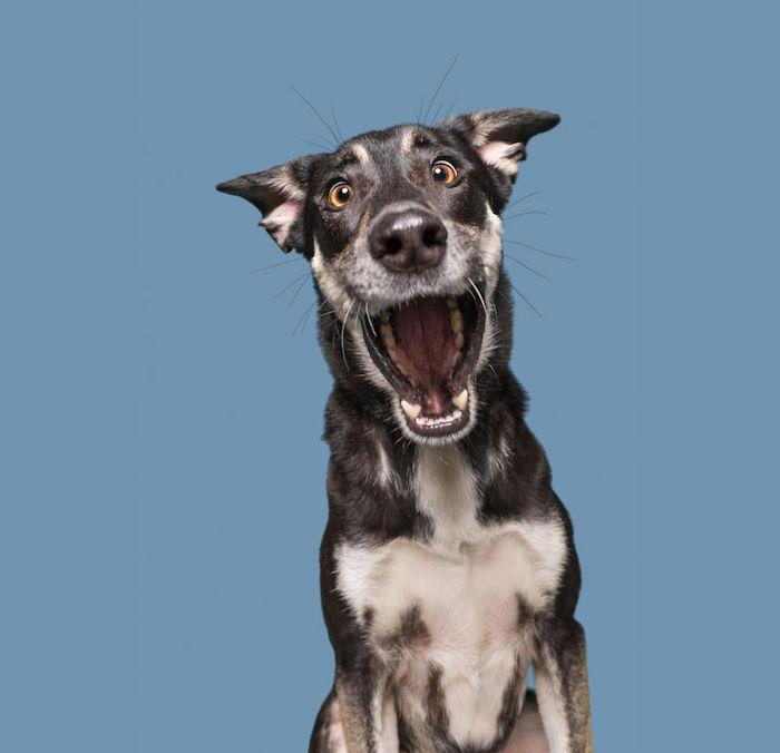 Image fond d écran amusement fond d écran ordinateur fond d écran drole image chien sourire