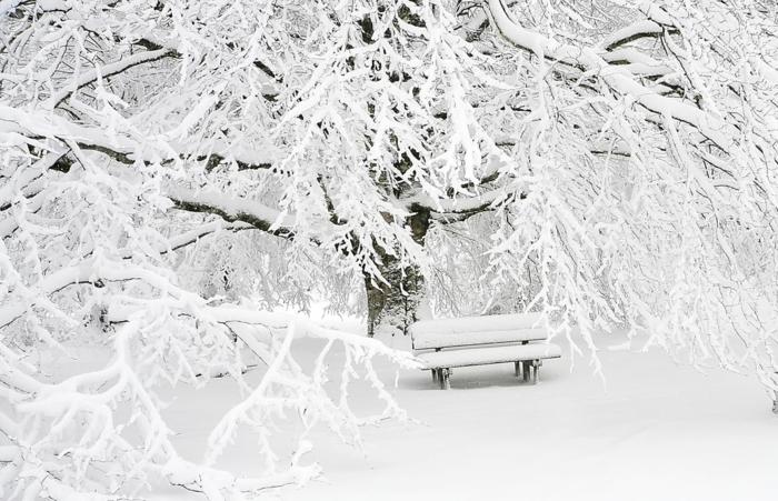 hiver tout blanc, paysage paradisiaque dans un parc en hiver, arbre aux branches blanches, banc couvert entièrement de neige, ambiance magique
