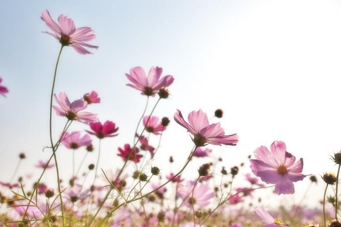 Champ de fleurs violets cool idée fond d écran jolie fleurie