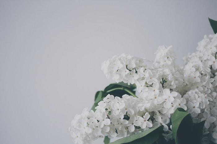 Qualité image fond d'écran gratuit fleurs fleur fond ecran blanc choisir le meilleur fond d écran du monde