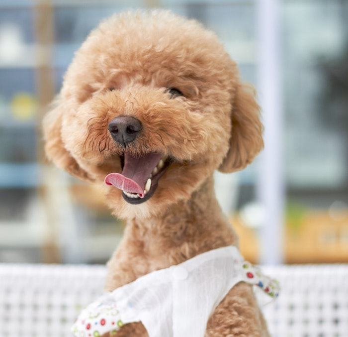 Fond d écran original photo pour fond d écran idée image arriere plan chien adorable