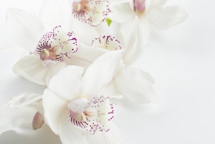 Adorable image de fleur fond d'écran fleur fond d écran