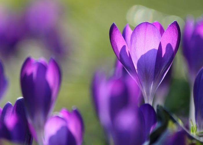 Décoration de bureau image de fleur fond d écran jolie