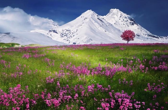 fond d écran zen avec fleurs et montagnes, champs vert aux fleurs rose devant montagnes enneigées et ciel bleu