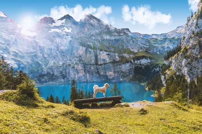 exemple de fond d écran gratuit avec un petit chien blanc sur banc de bois dans les montagnes enneigées avec un lac d'eau turquoise