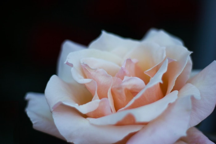 Belle photo pour fond d'écran rose magnifique fond ecran gratuit printemps