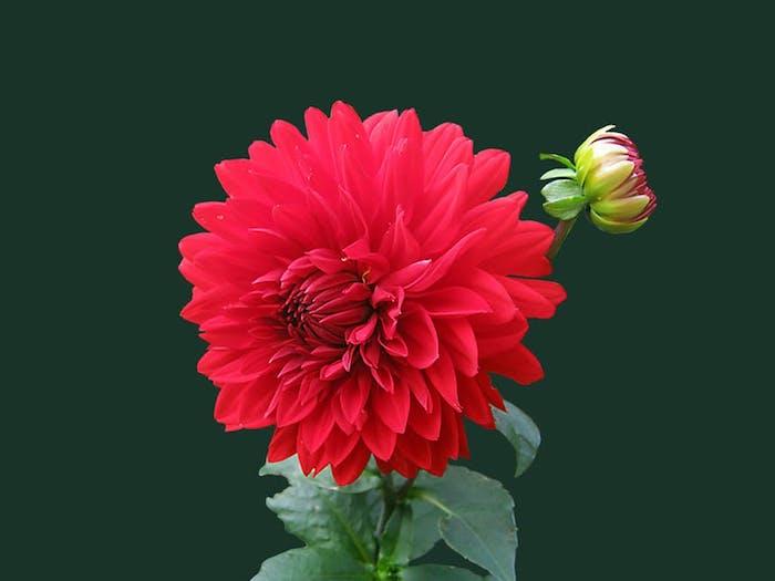 Cool idée printemps fond image de fleur fond ecran fleur