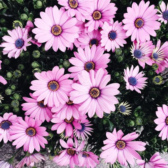 Photo bouquet de fleurs fond d'écran gratuit printemps fleurs roses cool idée fond d écran fleur
