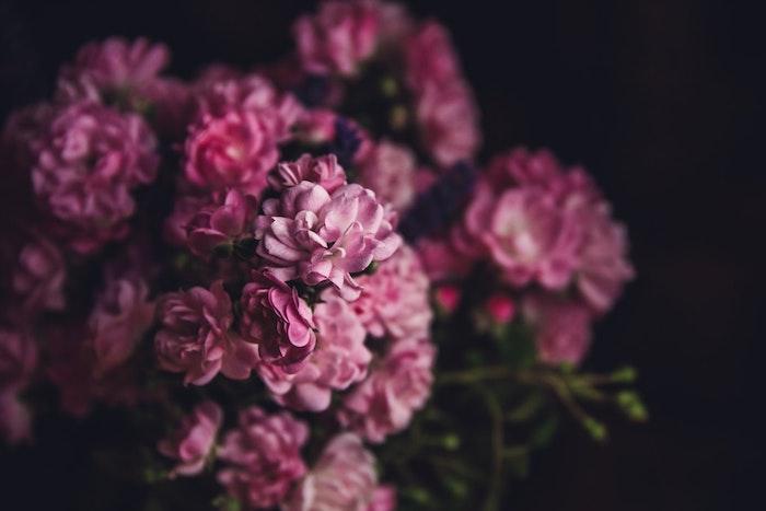 Arrière plan fleurs onds ecran gratuit fleurs idée theme fleur rose beaucoup de fleurs fond d'écran fleurie